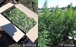 Несколько сотен кустов конопли житель Широковского района выращивал на земельном участке