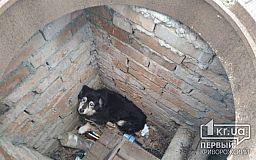 В Кривом Роге собака провалилась в открытый колодец