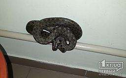 Огромную змею обнаружили в криворожской больнице