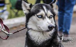 Сколько криворожане заплатят за стерилизацию и передержку домашних котов и собак в Центре обращения с животными