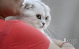 Криворожские пожарные спасли кота, застрявшего между трубами в квартире