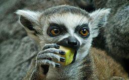 В Кривом Роге работает контактный зоопарк, в котором содержат животных вымирающих видов без документов, - волонтеры
