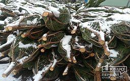 Где купить елку в Кривом Роге: легальные точки продажи