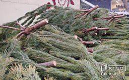 Цены на живые елки и сосны в Кривом Роге