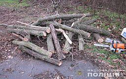 На выходных в Кривом Роге два лесоруба незаконно спилили больше 20 дубов и ясеней