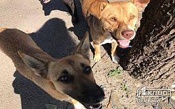 Криворожские пожарные спасли двух собак, провалившихся в глубокую яму