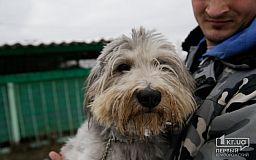 После ДТП осталась без лапы, но это не мешает ей радоваться жизни - собака Дина нуждается в заботливой семье