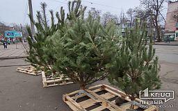 Криворожские полицейские изъяли более 500 елок у нарушителей