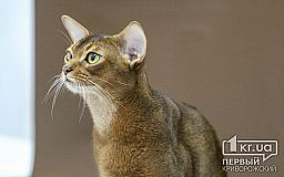 В Кривом Роге два дня продлится выставка кошек