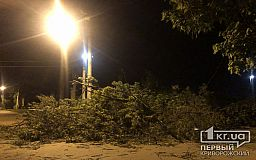 Ночью в Кривом Роге упало дерево и повредило линию электропередач