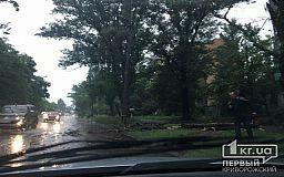В Кривом Роге во время бури дерево оборвало линию электропередач