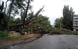 30 деревьев рухнули в Кривом Роге во время ливня и бури