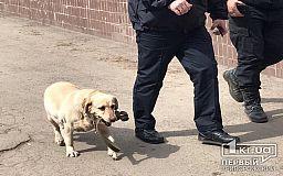 Три отеля проверяют взрывотехники и полиция в Кривом Роге - ищут бомбу