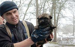 На Криворожской улице в Каменском пожарные спасли щенка, который упал в канализацию