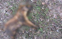 Фото 21+ В одном из районов Кривого Рога отравили бездомную собаку