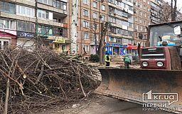 Обрезкой деревьев в Кривом Роге занимаются специалисты с профильным образованием
