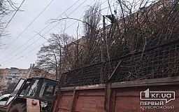 Куда обращаться криворожанам, если во дворе дома вскоре может рухнуть дерево