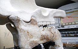 «Ужасную тварь» криворожане вскоре смогут увидеть в краеведческом музее