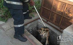 Собаку, которая несколько дней просидела в канализационном коллекторе, спасли криворожские пожарные