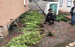Криворожанина, который выращивал на огороде коноплю, задержали полицейские