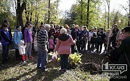 В криворожском парке высадили канадский церцис
