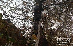 Криворожские пожарные спасли кота, который застрял на высоком дереве