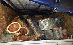 Криворожанин незаконно вырубил 40 деревьев в лесополосе