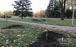 В криворожском парке Героев появились молодые катальпы, черемухи, рябины, клены