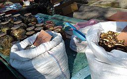 Рыба, яйца и грибы: в Кривом Роге ликвидировали несколько стихийных рынков
