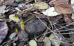 Во время тихой охоты житель Криворожского района нашел гранату
