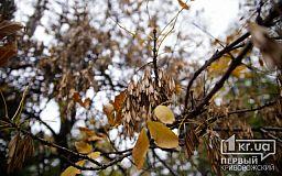 Погода в Кривом Роге и гороскоп на 26 октября