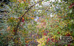 Погода в Кривом Роге 30 октября и гороскоп для горожан