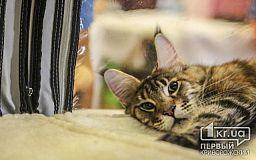 Криворожанка зарегистрировала петицию с просьбой создать круглосуточную ветеринарную клинику в городе