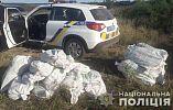 В Пятихатском районе нарушители пытались спрятать плантацию конопли на поле с подсолнухами