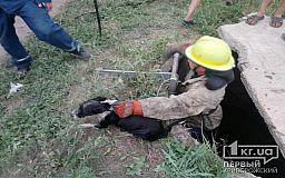 Из колодца в селе под Кривым Рогом спасли собаку