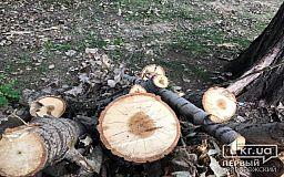 Криворожские управители начнут распил и вывоз поваленных деревьев (список адресов)