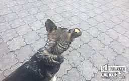 В Кривом Роге неизвестные отрезали бездомной собаке уши