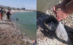 Эксперты ищут причины массового мора рыбы в Криворожском районе