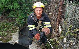 В Апостолово двое щенков упали в глубокую яму, их спасли пожарные