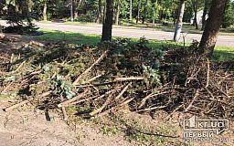 Криворожские управители не должны складировать на красной линии и придомовых территориях ветки и деревья, - заявление