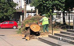 Полтора месяца понадобилось криворожским коммунальщикам, чтобы убрать огромное дерево