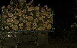 Недалеко от Кривого Рога мужчина незаконно вырубил больше 50 деревьев