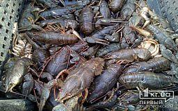 Раки дохнут из-за жары и недостатка кислорода в криворожской реке Ингулец, - чиновники