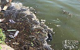 Из-за цветения воды в криворожской реке стало меньше кислорода