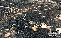 Горели сараи и сухостой: за минувшие сутки в Кривом Роге случилось 12 пожаров