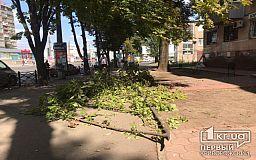 В центре Кривого Рога огромная ветка каштана рухнула на тротуар