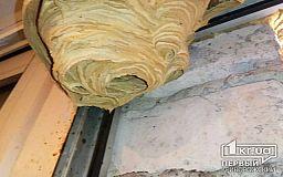 Пожарные уничтожили гнездо шершней в столовой школы Пятихатского района