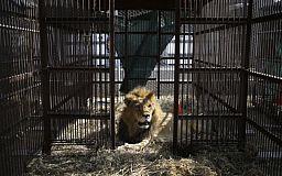 Без обсуждений и возражений: в Кривом Роге запретили передвижные цирки и зверинцы