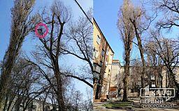 Кот 5 суток сидит на дереве, потому что в Кривом Роге нет службы по спасению животных