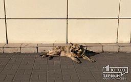Криворожан просят присоединиться к команде волонтеров по подсчету собак